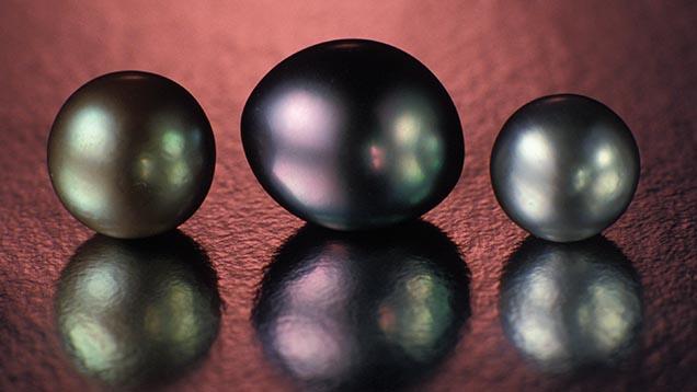 Perla neagra. Sursa foto: Gia